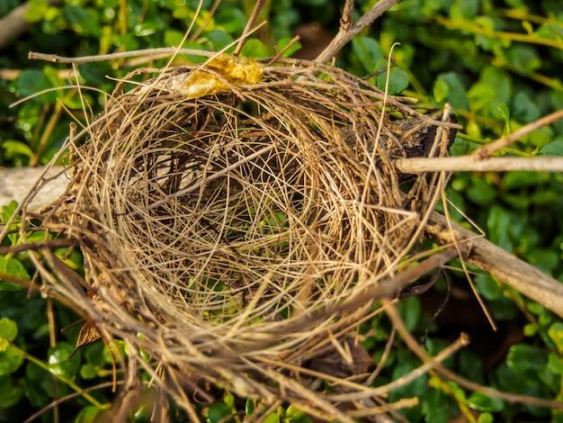 Nido de pájaro en una rama