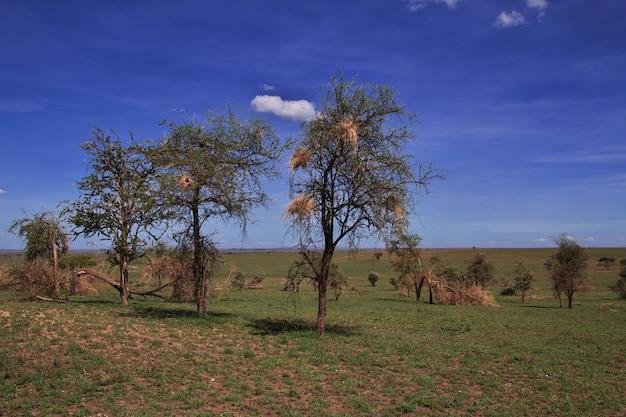 Nido de pájaro en safari en kenia y tanzania, áfrica