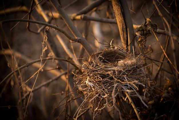 Un nido de pájaro vacío en las ramas de un árbol de primer plano.
