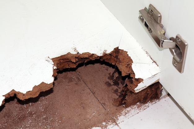 Nido de termitas, madera dañada comida por termitas o hormigas blancas