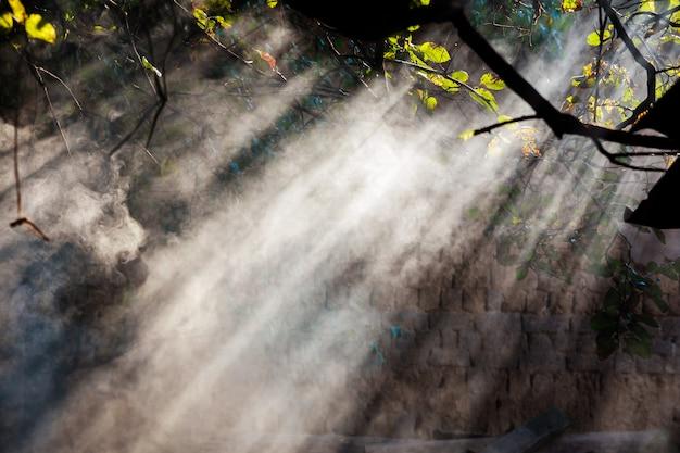 Niebla en el bosque contra el sol bosque brumoso contra rayo de sol