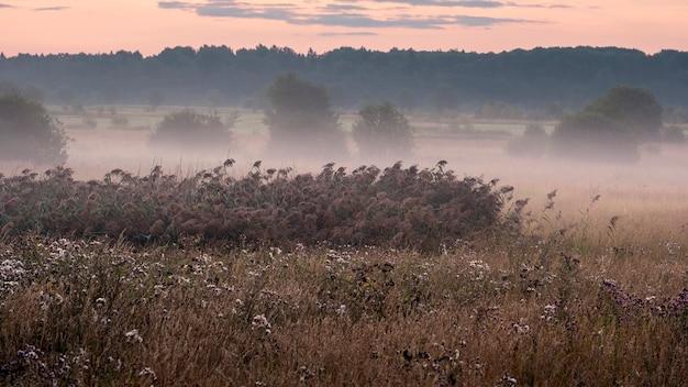 Niebla en un campo en otoño en el campo al amanecer temprano en la mañana