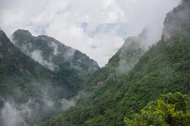 La niebla cubría las verdes montañas después de la lluvia.