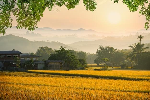 Niebla hermosa mañana en el campo de arroz
