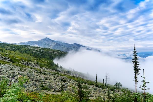 Niebla de la mañana sobre el bosque en la cordillera