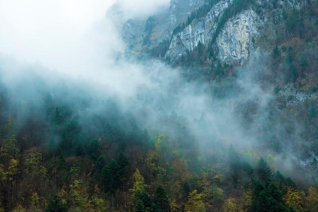 Niebla en la montaña, bosque de pino occidental en otoño