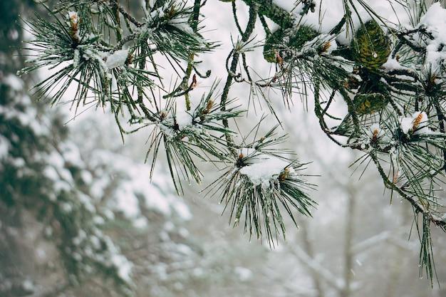La nieve y ramas de árboles abstractos en la montaña en la naturaleza.