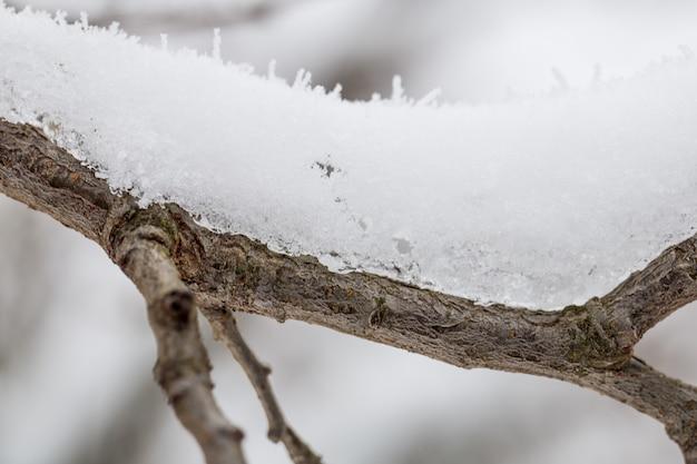 La nieve en las ramas de cerca, el clima de invierno