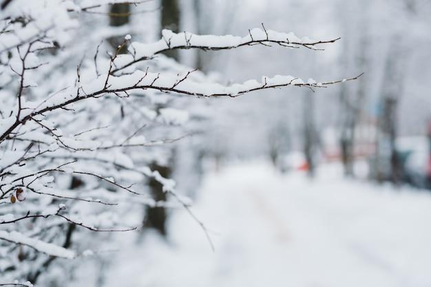 Nieve en las ramas en invierno
