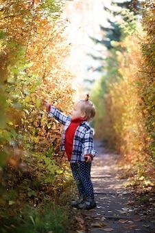 Niña en el bosque de otoño recoge hojas