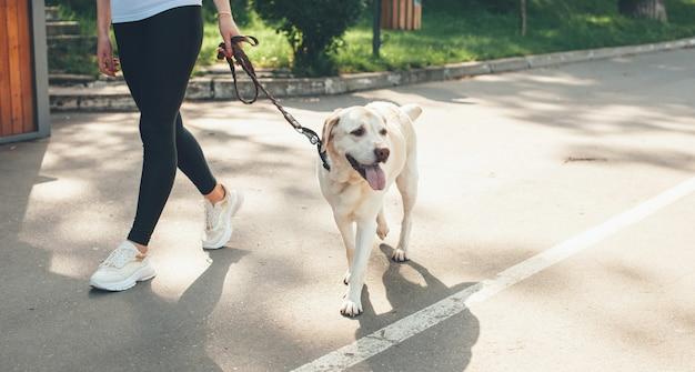 Niña caucásica caminando en el parque con su labrador durante un día soleado de verano