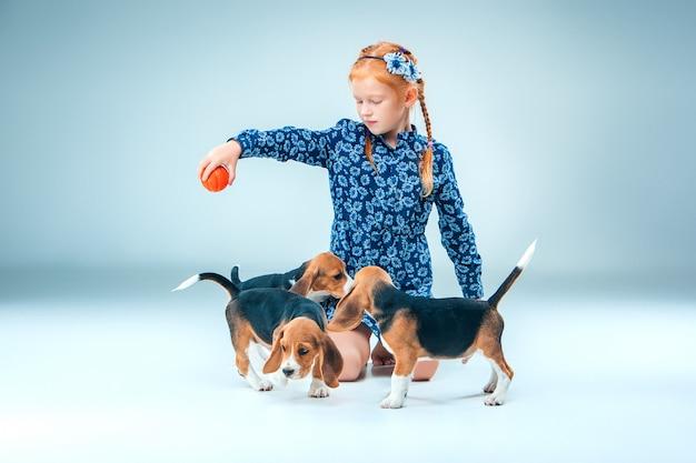 La niña feliz y los cachorros beagle sobre fondo gris