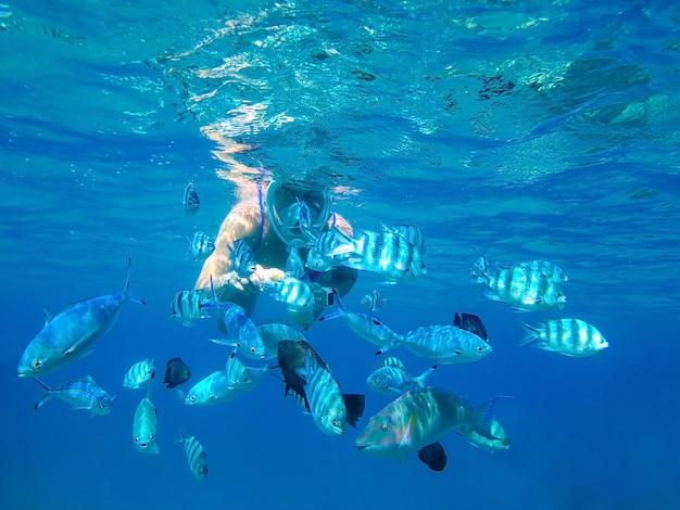 La niña en la máscara debajo del agua alimenta las manos de peces depredadores del arrecife de coral del mar rojo