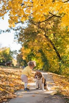 Niña pequeña alimentando su punto beagle en el parque