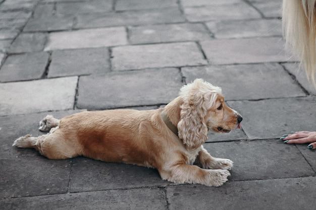 Niña con perro en el parque