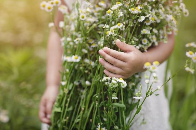 La niña que sostiene el ramo grande de las manos de manzanilla florece al aire libre