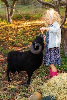 Niña rubia rizada en chaqueta vaquera y botas rosas alimentando ovejas domésticas negras. concepto de vida del agricultor