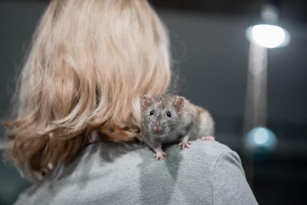 Niña sonriente que sostiene dos ratas decorativas caseras en sus brazos