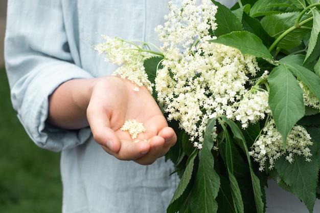 Niña sostiene en manos flores de saúco en el jardín
