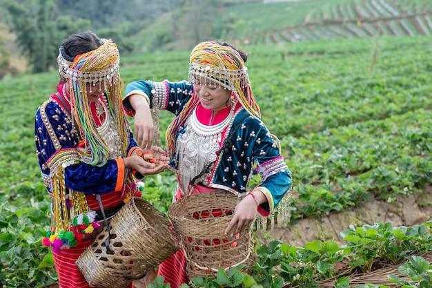Las niñas tribales están recogiendo fresas
