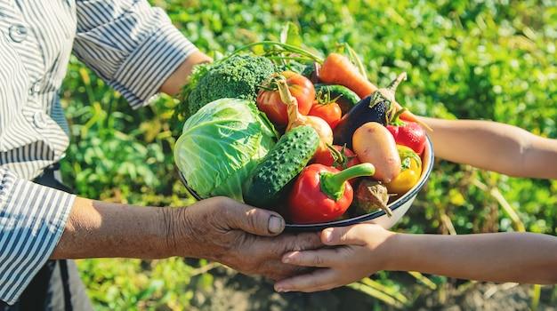 Niño y abuela en el jardín con verduras en sus manos. enfoque selectivo.
