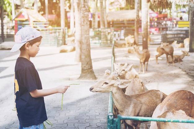El niño está alimentando comida a los ciervos felizmente