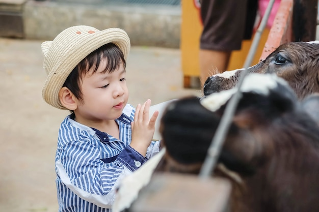 Niño asiático lindo del primer que ordeña el becerro por la botella de leche en fondo de la granja