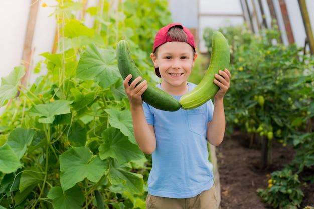 Un niño asombrado sosteniendo un gran pepino gigante en el invernadero.