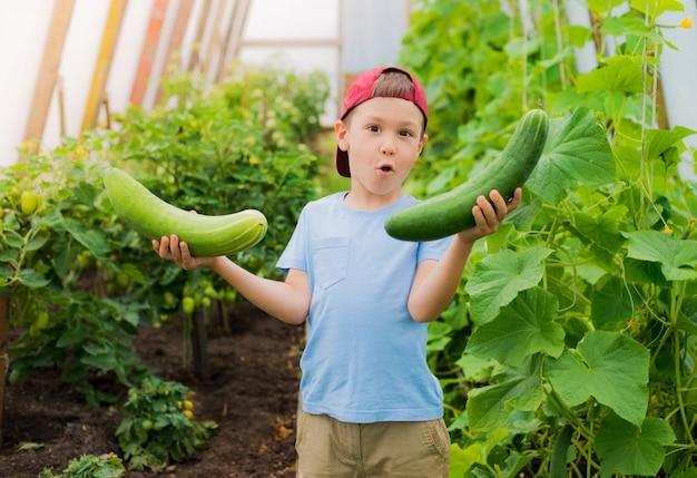 Un niño asombrado sosteniendo grandes pepinos gigantes en el invernadero.