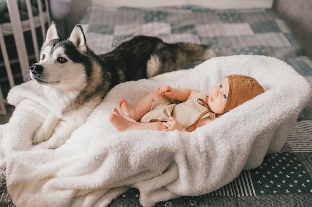 Niño bonito acostado en la cama de bebé con husky cerca de él.