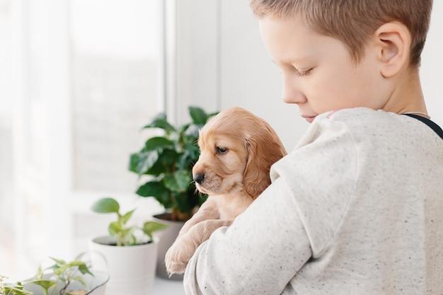 Niño caucásico, tenencia, cocker spaniel inglés, perrito
