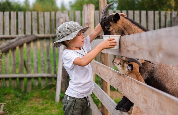 Niño con cuidado alimenta a la cabra. producto ecológico en la granja.