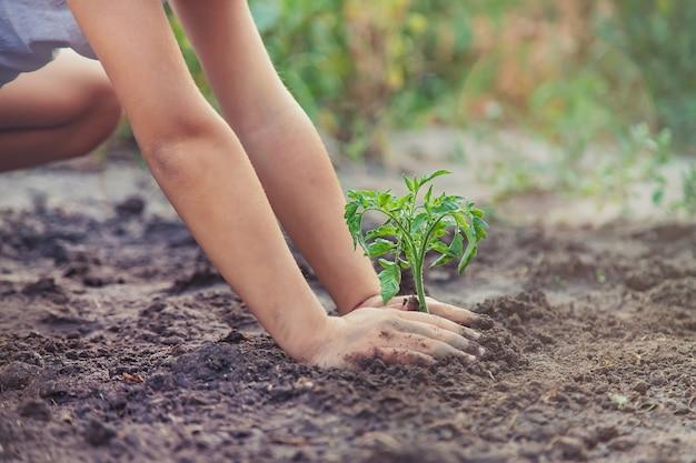 Un niño en el jardín planta una planta.