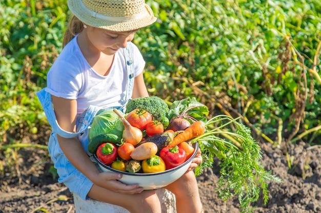 Niño en el jardín con verduras en sus manos. enfoque selectivo.