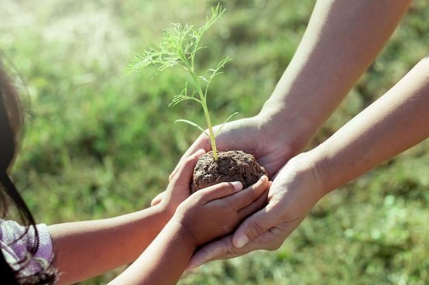 Niño niña y padre con planta joven en las manos juntas
