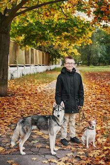 Niño niño con perros huskys y jack russell terrier camina en el parque en otoño