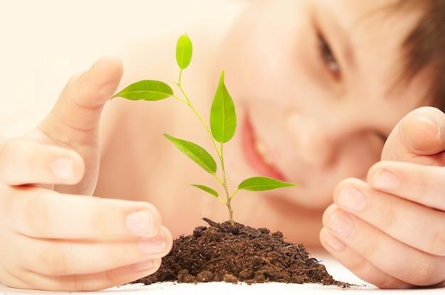 El niño observa el cultivo de una planta joven.