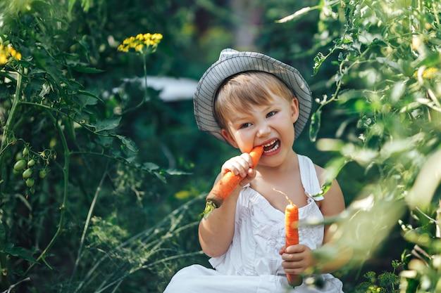 Niño pequeño agricultor niño sentado en la línea de plantas de tomate, vistiendo un traje blanco casual y sombrero gris, comiendo zanahoria, tiempo de cosecha