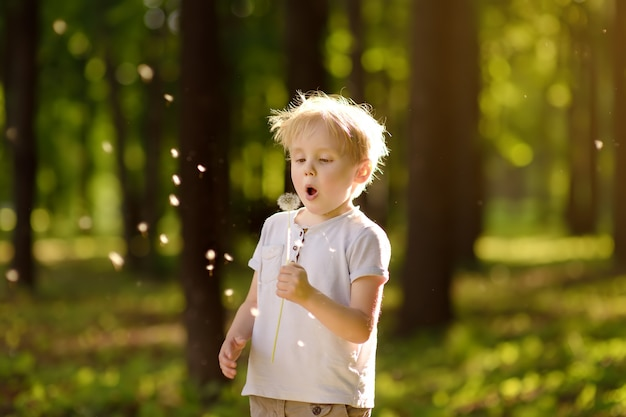 El niño pequeño sopla la pelusa del diente de león. pidiendo un deseo.