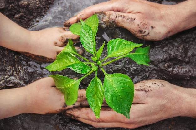 Un niño planta una planta en el jardín. enfoque selectivo
