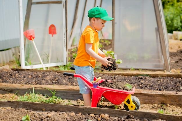 Niño plantado en el jardín.