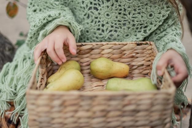 Niño recogiendo manzanas en la granja en otoño. niña que juega en huerto del manzano. nutrición saludable.
