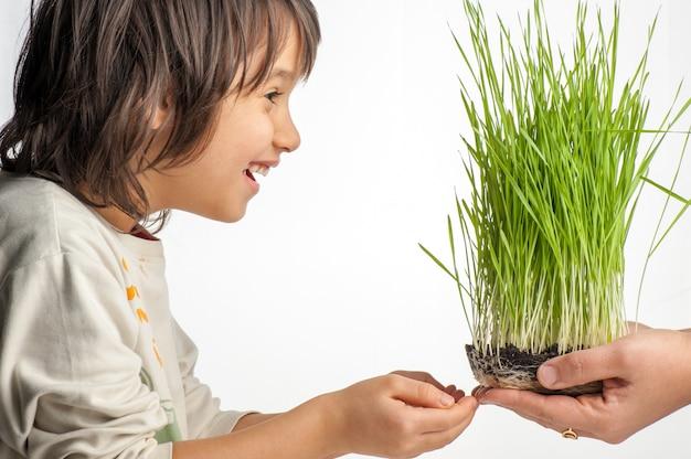 Niño, tenencia, plantas