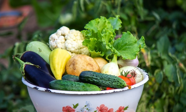 El niño tiene verduras en sus manos. verduras en un cuenco en la granja. producto ecológico de la finca