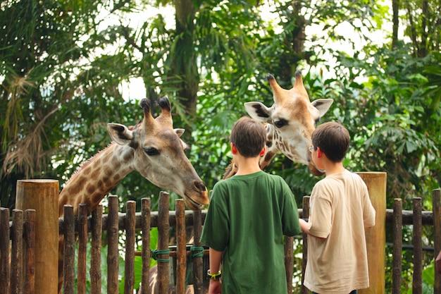 Niños alimentando jirafa