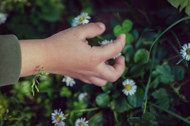Niños dedos flor prado sosteniendo