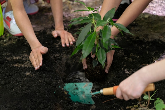 Niños plantando juntos en el bosque.