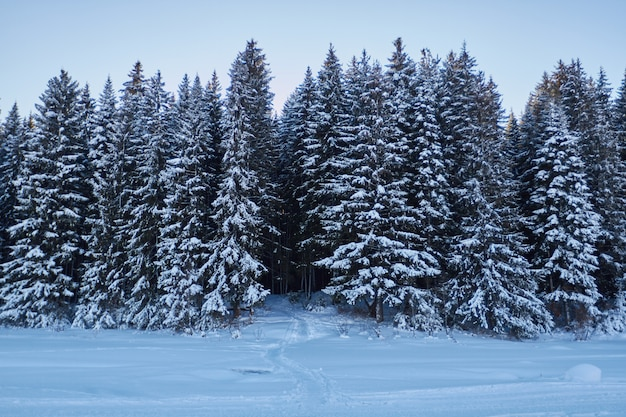 Noche en bosque oscuro caminar en madera antes de navidad