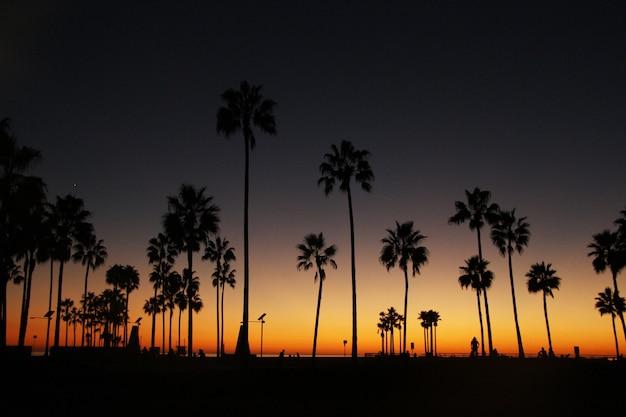 La noche cuelga sobre las palmas altas en la orilla del océano