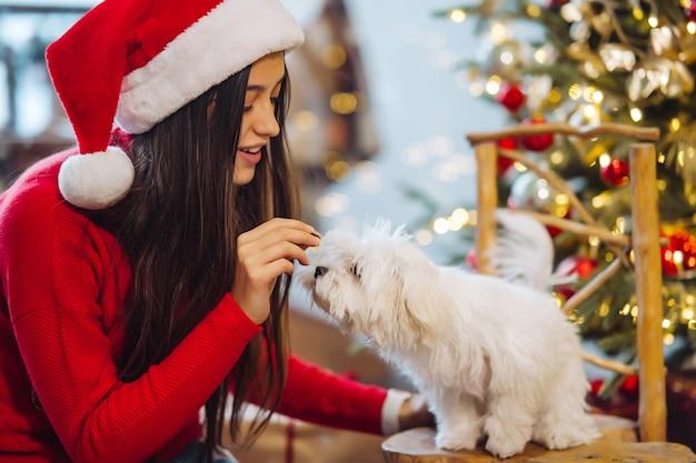 En nochevieja, una mujer juega con un perro pequeño. año nuevo con un amigo